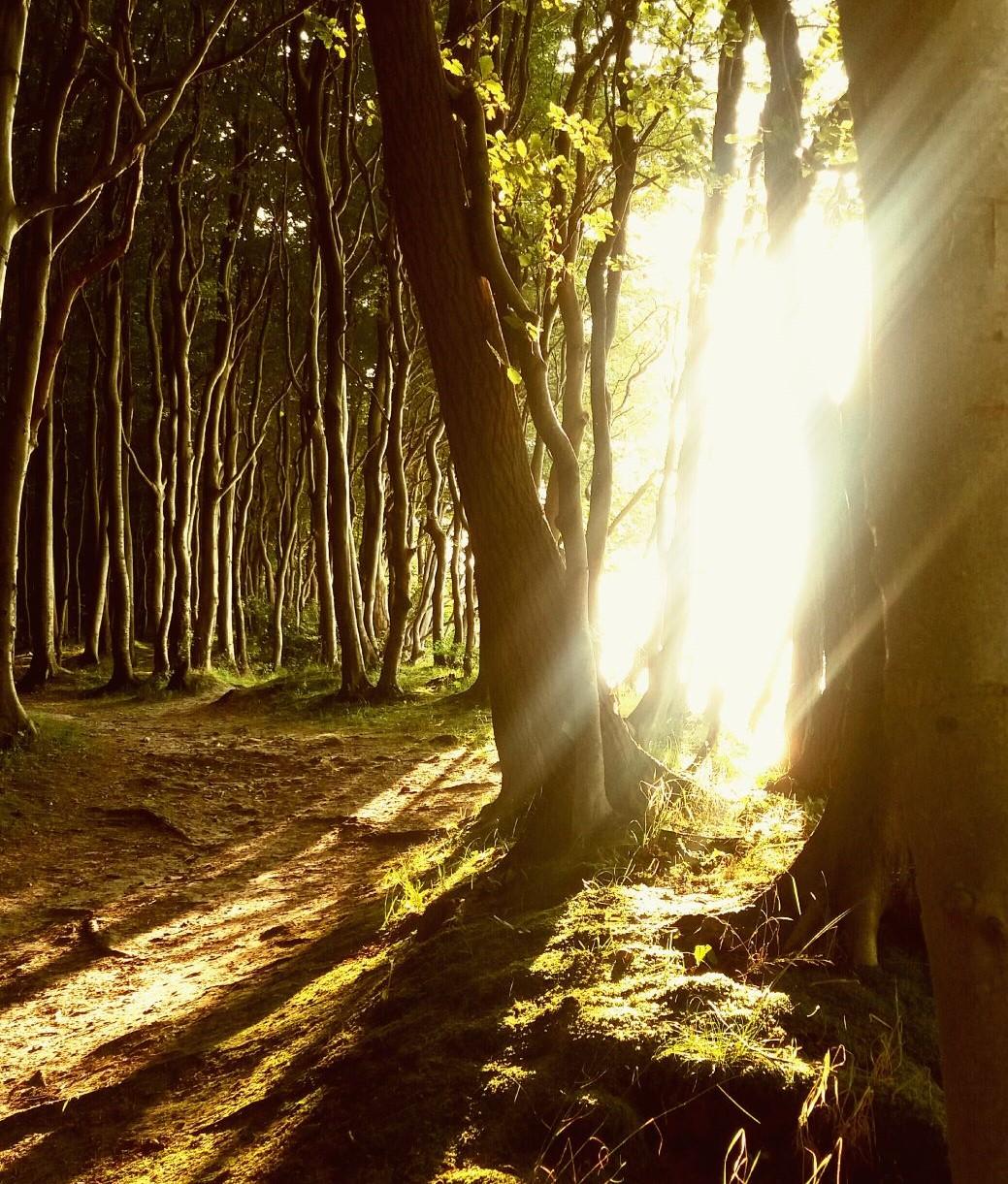 Dein Lebensweg – Wenn der Weg schön ist, frag nicht wohin er führt.